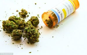 National Drug Prevention Alliance & PPP » Cannabis/Marijuana